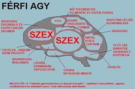 ffi_agy.jpg